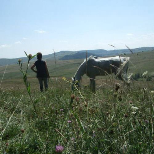 Riding holidays in Transylvania with In The Saddle. Horse grazing