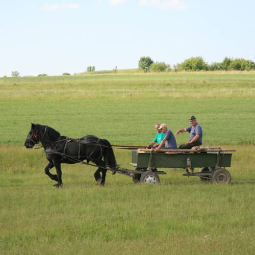 Riding holidays in Transylvania with In The Saddle. Horse and cart.