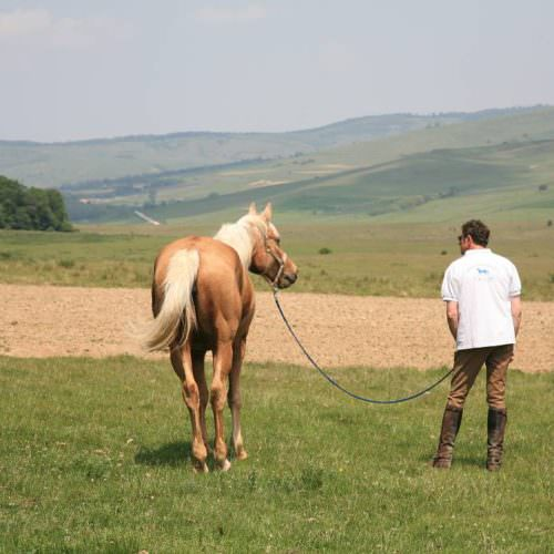 Riding holidays in Transylvania with In The Saddle. Palomino horse.