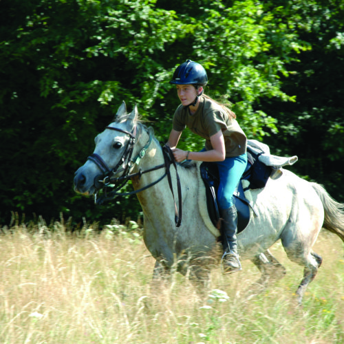 Fun, fast riding. Riding holidays in Transylvania with In The Saddle.
