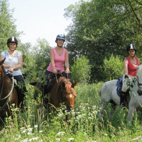 Riding holidays in Transylvania with In The Saddle. Horses in sunshine