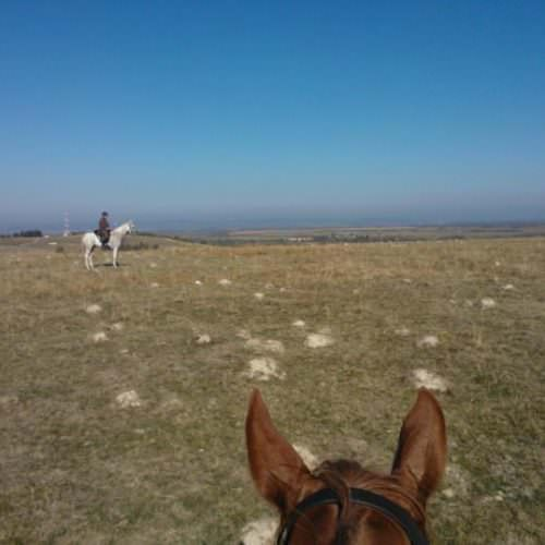 Riding holidays in Transylvania with In The Saddle. View between horse ears!