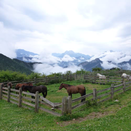 Adventurous trail riding holiday through Pyrenees Mountains, Spain. Horses, spectacular views.