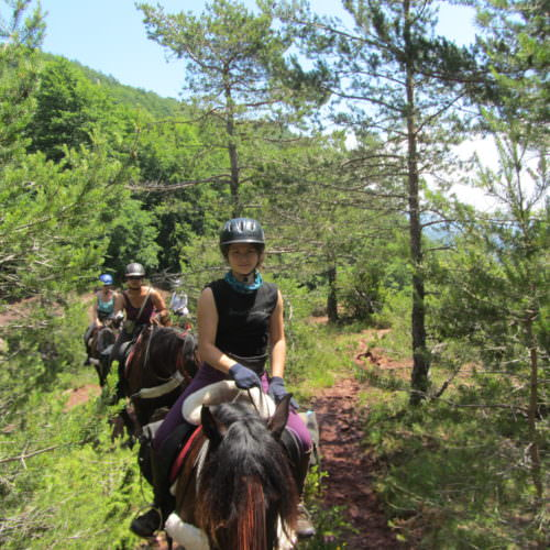Adventurous trail riding holiday through the Pyrenees Mountains, Spain. Horses in the forest