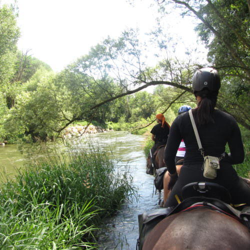 Adventurous trail riding holiday through the Pyrenees Mountains, Spain. Horses crossing river