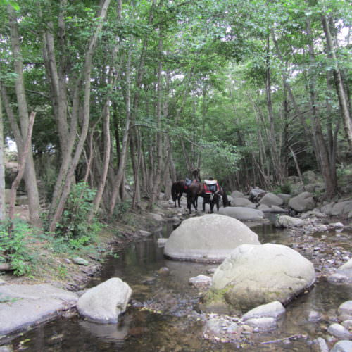 Adventurous trail riding holiday through the Pyrenees Mountains, Spain. Horses drinking