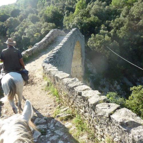 Riding holidays through the Pyrenees and coastal trails in Catalonia. Spain. Horses