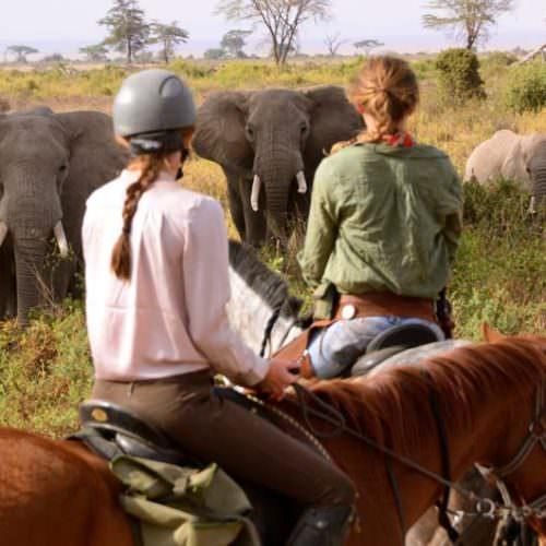 Tanzania ele veiwing