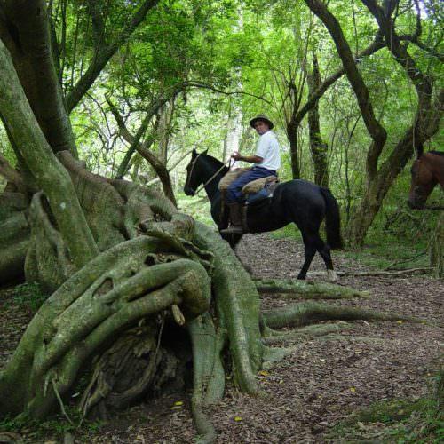 Uruguay - woods