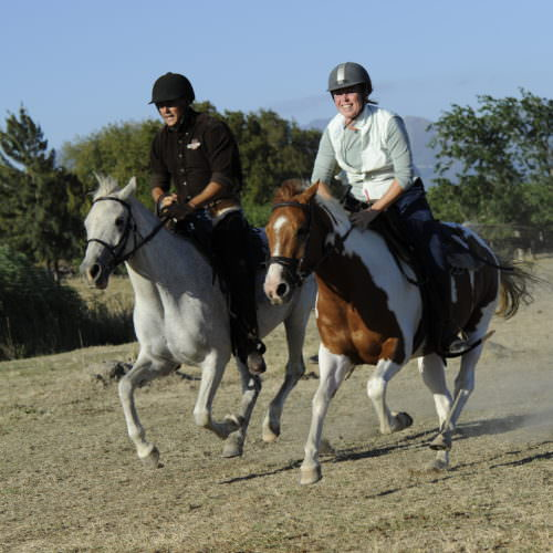 horses cantering at cape winelands