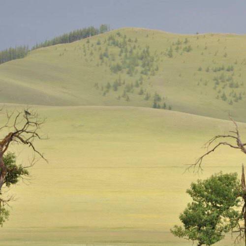Mongolia trees