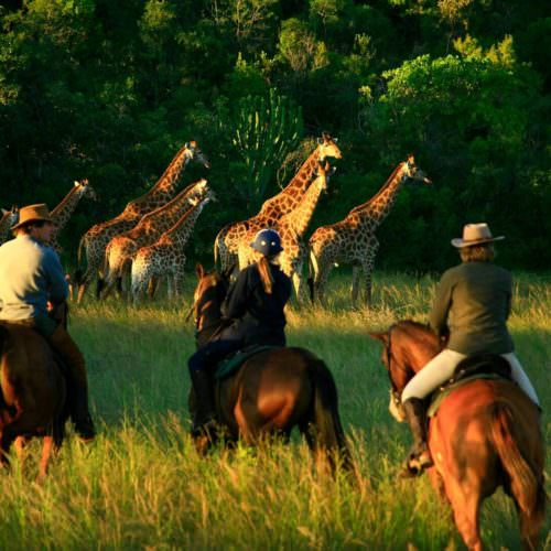Game viewing from horseback