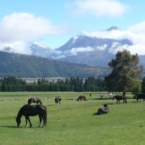 Horses grazing at their base.