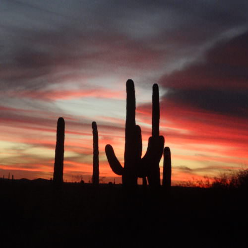 Sunset from the ranch. Desert Cactus in beautiful red skies at Tanque Verde, Arizona