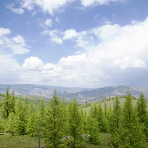 Mongolia horse trail