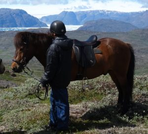 Greenland horse