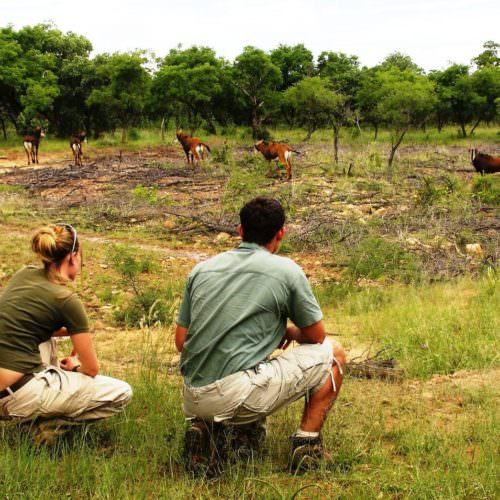 Vandring safari
