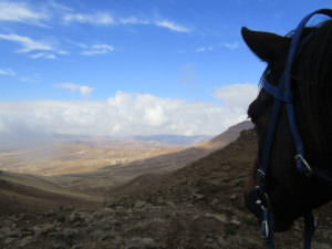 Lesotho - horse/view