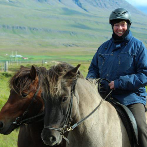 Iceland leading horse