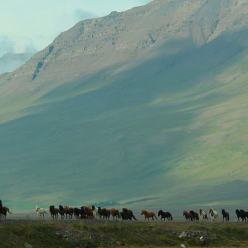 Mountain riding in Iceland