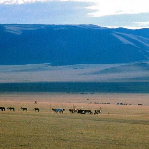 Mongolia quiet steppes