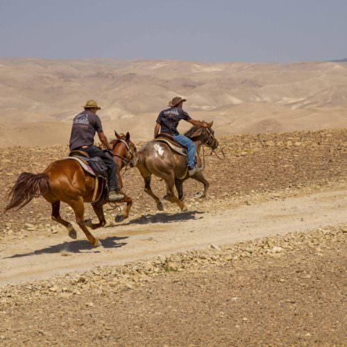 Israel desert gallop