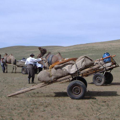 Mongolia camel carts