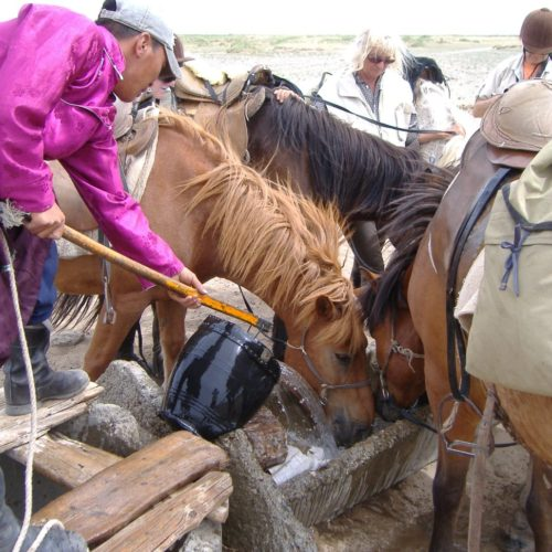 Mongolia horses drinking
