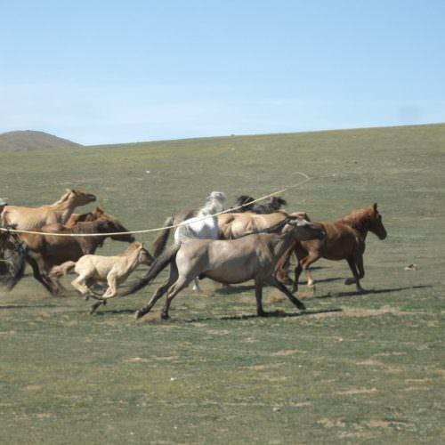 Mongolia horseman
