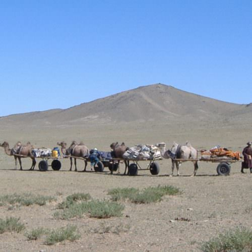 Camel carts on the Gobi Steppe