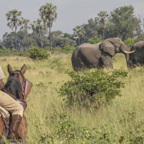Mobile horseback safari in the Okavango Delta, Botswana. Horse and rider watching elephant.