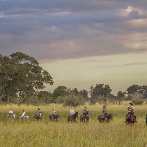 Mobile horseback safari in the Okavango Delta, Botswana. Horse and riders in the long grass.