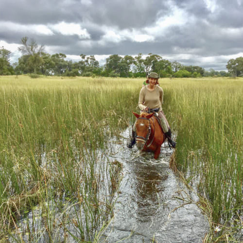 Mobile horseback safari in the Okavango Delta, Botswana. Riding through the water on horses.