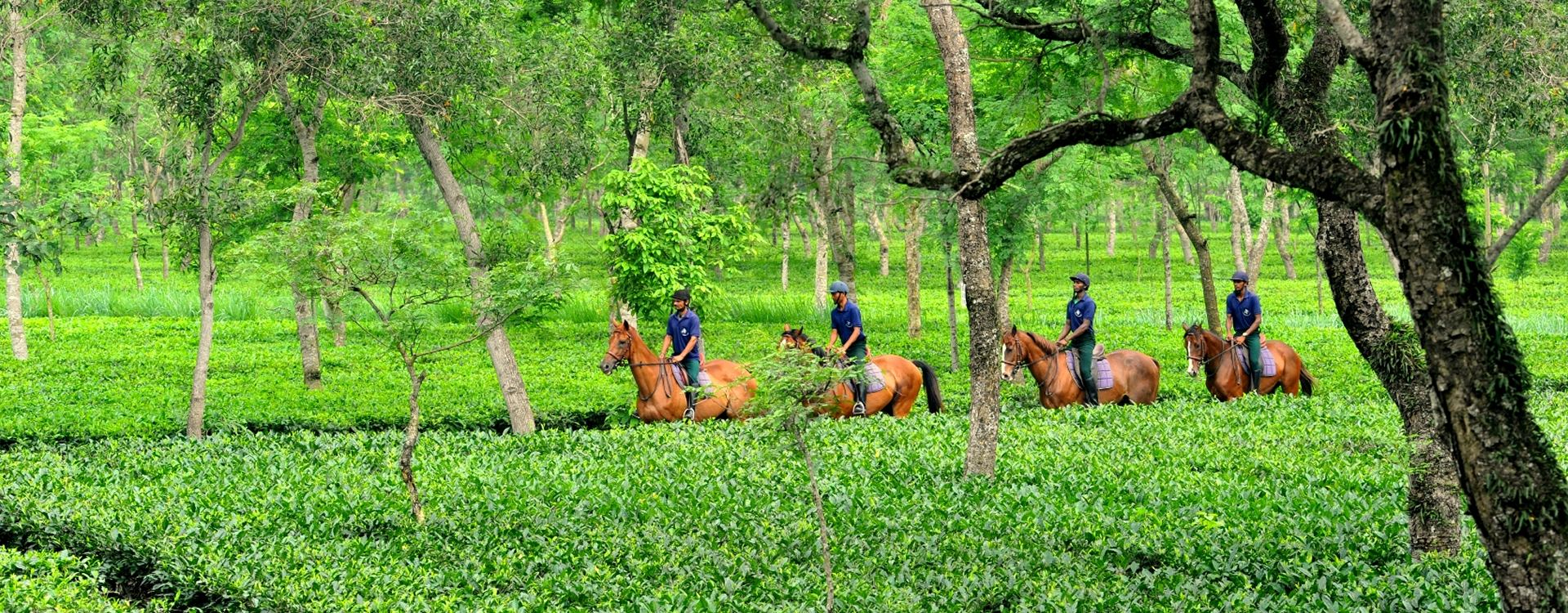 Riding through the tea gardens of Assam