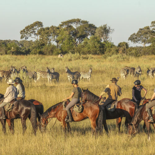 Mobile horseback safari in the Okavango Delta, Botswana. Watching zebra from horses.