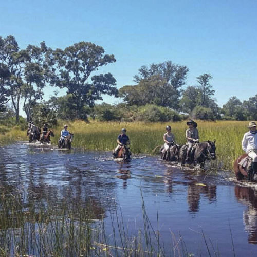 Mobile horseback safari in the Okavango Delta, Botswana. Horses in the water.