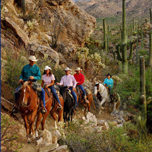 Out on the trail. Horses riding among desert cactus in Arizona. Western Riding vacations with In The Saddle