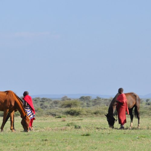 Horses grazing in Tanzania