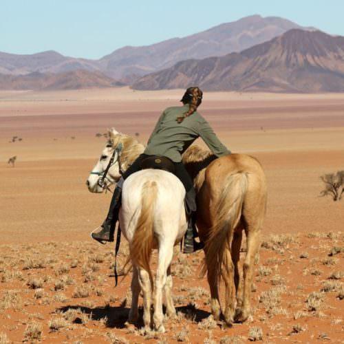 Wild horses ride