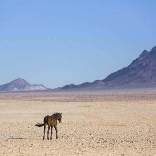 Namibia loose horse