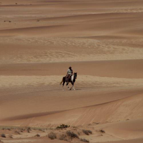 Wild horses Namibia