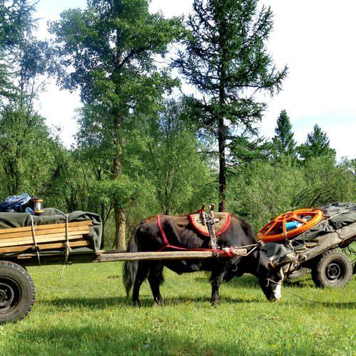 Mongolia yak carts