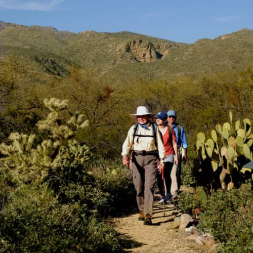 Guided walks through the Arizona desert from Tanque Verde. Hiking amongst the cactus.