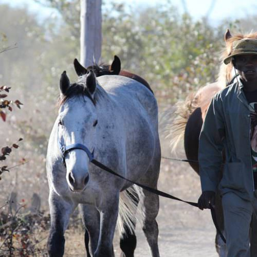 Riding Safari at Motswiri Camp, Okavango Delta, Botswana. Horses.