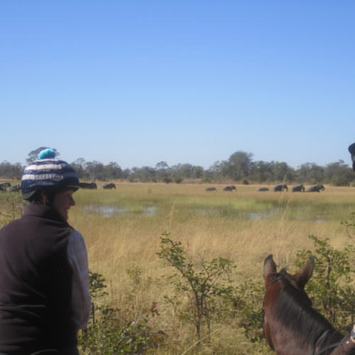 Riding Safari at Motswiri Camp, Okavango Delta, Botswana. Horses and elephant.