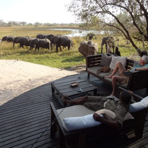 Riding Safari at Motswiri Camp, Okavango Delta, Botswana. Watching elephant.