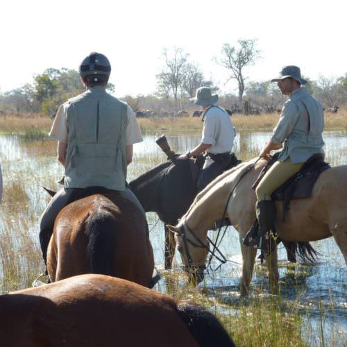 Riding Safari at Motswiri Camp, Okavango Delta, Botswana. Horses and riders.