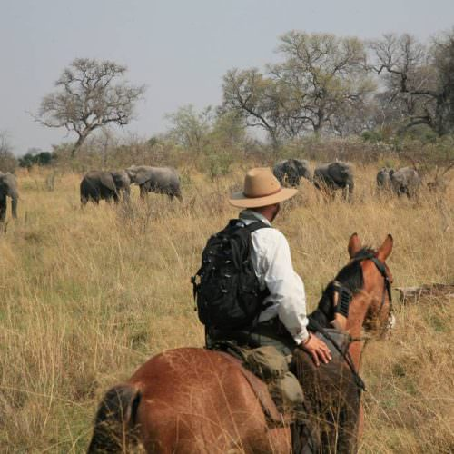 Riding Safari at Motswiri Camp, Okavango Delta, Botswana. Watching elephant from horseback.