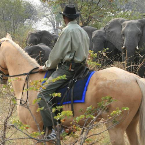 Riding Safari at Motswiri Camp, Okavango Delta, Botswana. Watching elephants from horseback.