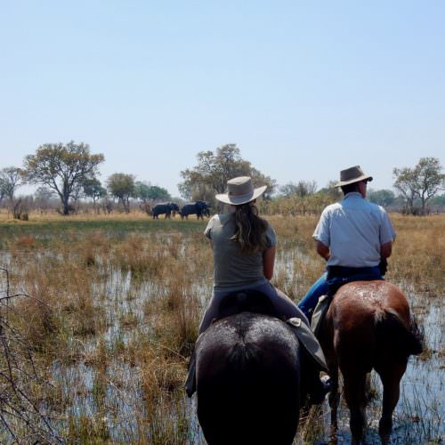 Mobile horseback safari in the Okavango Delta, Botswana. Horses. Watching elephant.